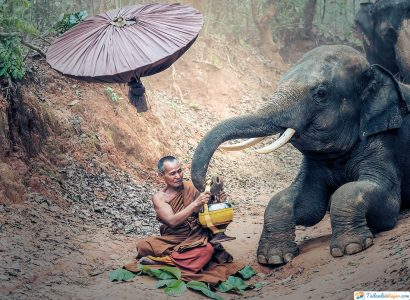 campos-de-elefantes